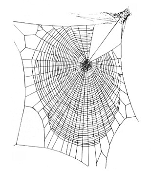 Zygiella web Orb-web by permission of: Laura Bassett, via Wikipedia