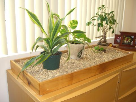 Gravel tray for watering plants, apple wood